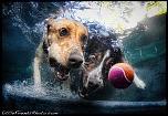 Pulsa en la imagen para verla en tamaño completo  Nombre: underwater-photos-of-dogs-seth-casteel-9.jpg Visitas: 38 Tamaño: 113.8 KB ID: 8922