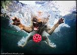 Pulsa en la imagen para verla en tamaño completo  Nombre: underwater-photos-of-dogs-seth-casteel-5.jpg Visitas: 34 Tamaño: 132.2 KB ID: 8924