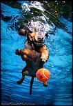 Pulsa en la imagen para verla en tamaño completo  Nombre: underwater-photos-of-dogs-seth-casteel-1.jpg Visitas: 32 Tamaño: 93.1 KB ID: 8928