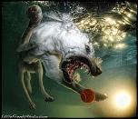 Pulsa en la imagen para verla en tamaño completo  Nombre: underwater-photos-of-dogs-seth-casteel-4.jpg Visitas: 36 Tamaño: 107.4 KB ID: 8929
