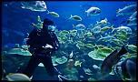 Pulsa en la imagen para verla en tamaño completo  Nombre: scuba-diving-in-puerto-vallarta-9099bc10.jpg Visitas: 2 Tamaño: 130.4 KB ID: 8809