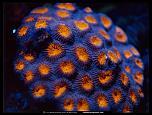 Pulsa en la imagen para verla en tamaño completo  Nombre: knob-coral-517520-lw.jpg Visitas: 4 Tamaño: 117.1 KB ID: 8976