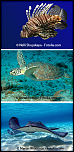 Pulsa en la imagen para verla en tamaño completo  Nombre: 5fSXcRD6-03-s-.png Visitas: 5 Tamaño: 233.9 KB ID: 8583