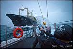 Pulsa en la imagen para verla en tamaño completo  Nombre: news_110209_1_1_Sea_Shepherd_interrupts_slaughter_7480.jpg Visitas: 1 Tamaño: 17.9 KB ID: 6071