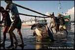 Pulsa en la imagen para verla en tamaño completo  Nombre: pesca-manta-raya-2.jpg Visitas: 19 Tamaño: 218.6 KB ID: 8772