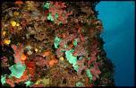 Pulsa en la imagen para verla en tamaño completo  Nombre: La-pesca-furtiva-causa-el-60-de-perdidas-de-coral-rojo-en-las-costas-catalanas_image365_.jpg Visitas: 1 Tamaño: 19.5 KB ID: 8499