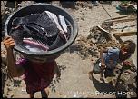 Pulsa en la imagen para verla en tamaño completo  Nombre: branquispinas-manta-rayas-3.jpg Visitas: 23 Tamaño: 241.9 KB ID: 8767