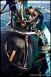 Pulsa en la imagen para verla en tamaño completo  Nombre: pesca-manta-raya-3.jpg Visitas: 16 Tamaño: 10.9 KB ID: 8775