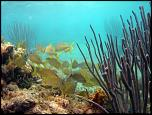 Pulsa en la imagen para verla en tamaño completo  Nombre: bermudas-submarinismo-snorkel-300x225.jpg Visitas: 2 Tamaño: 26.6 KB ID: 8569