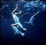Pulsa en la imagen para verla en tamaño completo  Nombre: Ama-Pearl-Divers-420x0.jpg Visitas: 5 Tamaño: 48.5 KB ID: 9140