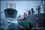 Pulsa en la imagen para verla en tamaño completo  Nombre: news_110209_1_2_Sea_Shepherd_interrupts_slaughter_7493.jpg Visitas: 1 Tamaño: 18.5 KB ID: 6072