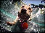 Pulsa en la imagen para verla en tamaño completo  Nombre: underwater-photos-of-dogs-seth-casteel-6.jpg Visitas: 36 Tamaño: 136.2 KB ID: 8923
