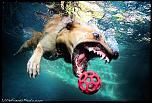 Pulsa en la imagen para verla en tamaño completo  Nombre: underwater-photos-of-dogs-seth-casteel-10.jpg Visitas: 36 Tamaño: 119.9 KB ID: 8931