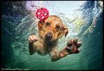Pulsa en la imagen para verla en tamaño completo  Nombre: underwater-photos-of-dogs-seth-casteel-8.jpg Visitas: 28 Tamaño: 116.7 KB ID: 8933