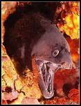 Pulsa en la imagen para verla en tamaño completo  Nombre: calafat2012.jpg Visitas: 17 Tamaño: 52.4 KB ID: 9850