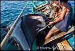 Pulsa en la imagen para verla en tamaño completo  Nombre: pesca-manta-raya.jpg Visitas: 16 Tamaño: 48.1 KB ID: 8776