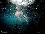 Pulsa en la imagen para verla en tamaño completo  Nombre: box-jellyfish.jpg Visitas: 5 Tamaño: 145.0 KB ID: 8977