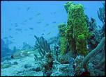 Pulsa en la imagen para verla en tamaño completo  Nombre: donde-bucear-en-Barbados.jpg Visitas: 1 Tamaño: 42.5 KB ID: 9054