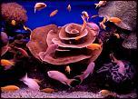 Pulsa en la imagen para verla en tamaño completo  Nombre: Submarinismo-en-Israel.jpg Visitas: 1 Tamaño: 65.2 KB ID: 9123